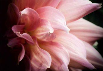 Skleněný Obraz  Dahlia
