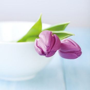 Skleněný Obraz Fialové tulipány v misce