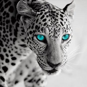Skleněný Obraz Leopard - Modré oči