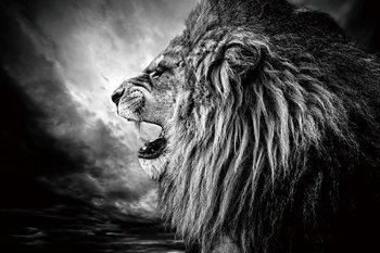 Skleněný Obraz Lev - Lví hlava v noci