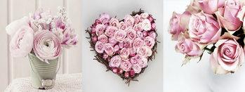 Skleněný Obraz Pink World - Růžové růže
