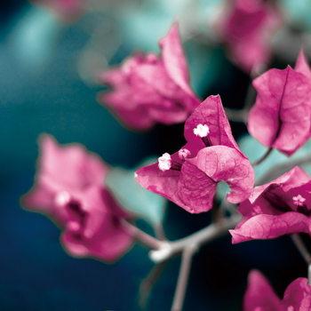 Skleněný Obraz Růžové květy - Strom