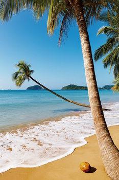 Skleněný Obraz Sen - Palmová pláž