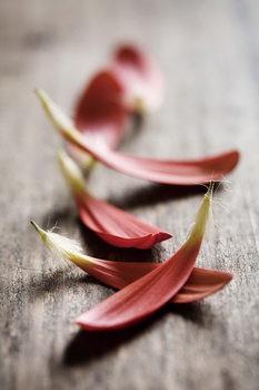 Skleněný Obraz Zen - Červené lístky