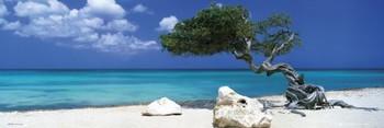 Divi Divi Tree - Tom Mackie Smale plakat