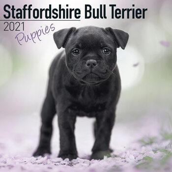 Ημερολόγιο 2021 Staffordshire Bull Terr