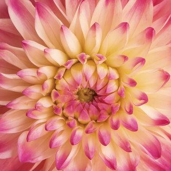 Flowers - Pink Gerbera Staklena slika