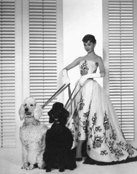 Stampa su Tela Audrey Hepburn