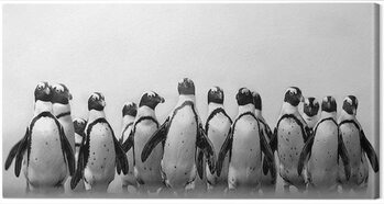 Stampa su Tela Marina Cano - Cape Town Penguins