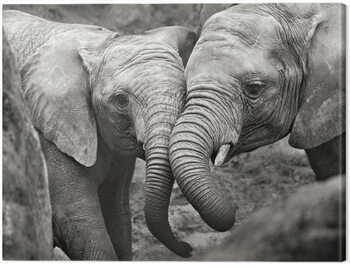 Stampa su Tela Marina Cano - Elephants in Love