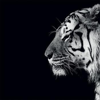 Stampa su Tela Nicolas Evariste - Panthera Tigris
