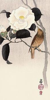 Stampa su Tela Ohara Koson - Songbird and Flowering Camellia