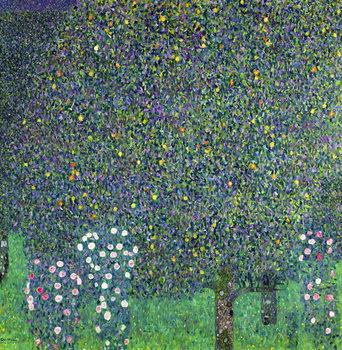Stampa su Tela Roses under the Trees, c.1905