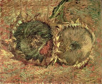 Stampa su Tela Two Cut Sunflowers, 1887