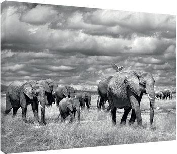 Stampa su Tela Marina Cano - Elephants of Kenya