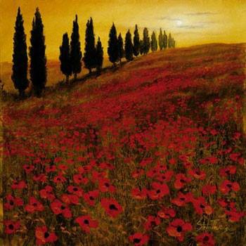 Poppies - Stampe d'arte