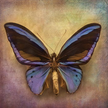 Butterfly - Blue Steklena slika