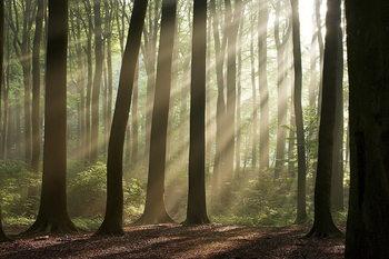 Forest - Sunbeams Steklena slika