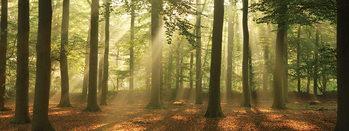 Forest - Sunny Forest Steklena slika