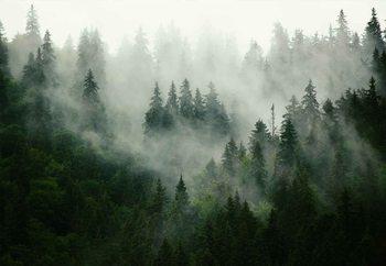 Misty Forest Steklena slika