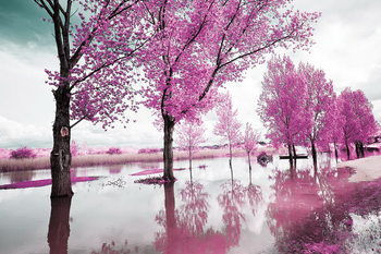 Pink World - Blossom Tree 1 Steklena slika