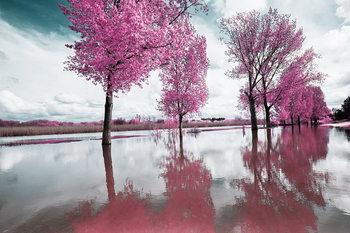 Pink World - Blossom Tree 2 Steklena slika