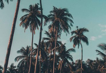 Retro Palms Steklena slika