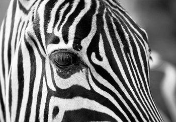 Stripes Steklena slika