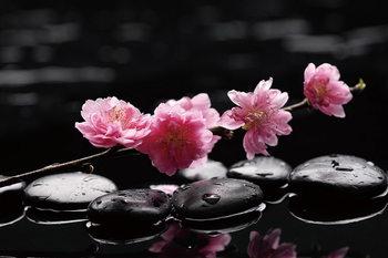 Zen - Pink Orchid 2 Steklena slika