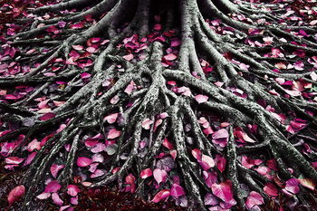 Szklany obraz Pink World - Pink Roots