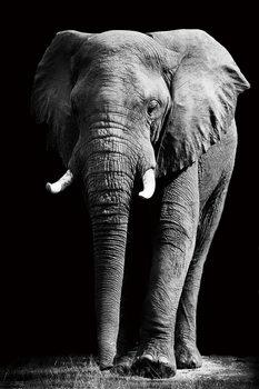 Tableau sur verre Elephant - Standing b&w