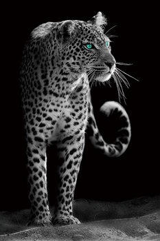 Tableau sur verre Gepard - Black and White