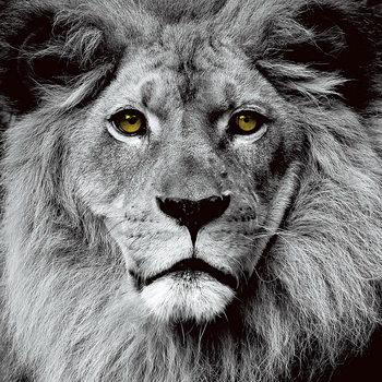 Tableau sur verre Lion - Pride b&w