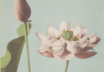 Tableau sur verre Lotus Blossom, Ogawa Kazumasa.