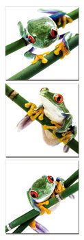 Colorful Frog Tableau Multi-Toiles