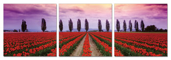 Flower fields Tableau Multi-Toiles