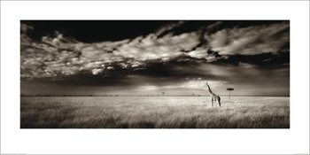 Ian Cumming  - Masai Mara Giraffe Reproduction de Tableau