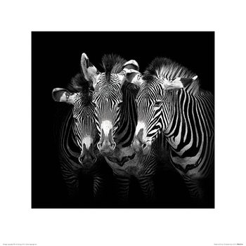 Reproduction d'art Marina Cano - Shades of Grevy