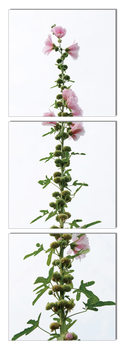 Modern design - flower with pink blossoms Tableau Multi-Toiles