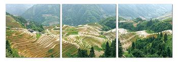 Terraced plantations Tableau Multi-Toiles