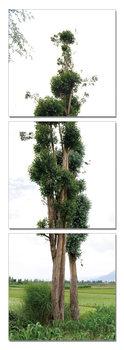 Tree - Endless Love Tableau Multi-Toiles