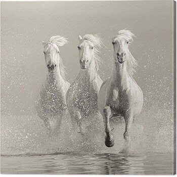Tablou Canvas Carys Jones - Three White Horses