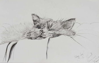 Tablou Canvas Monty sleepy boy, 2013,
