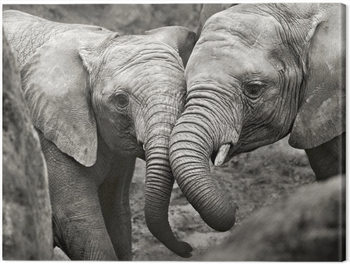 Marina Cano - Elephants in Love Tablou Canvas