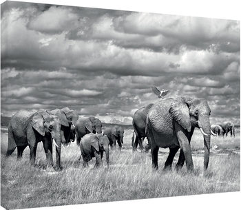 Marina Cano - Elephants of Kenya Tablou Canvas