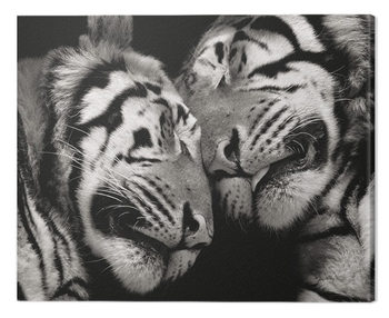 Marina Cano - Sleeping Tigers Tablou Canvas