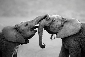 Tablouri pe sticla Elephant - Friends