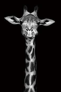 Tablouri pe sticla Giraffe - Head b&w