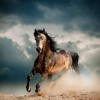 Tablouri pe sticla Horse - Running in the Dust