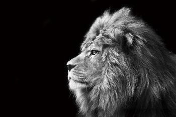 Tablouri pe sticla Lion - Black and White